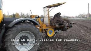 YouTube-Video: Die Bepflanzung